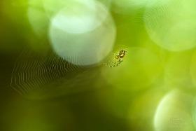 Malý pavouček (Araneae) Fotografie s vyváženou expozicí denního světla.