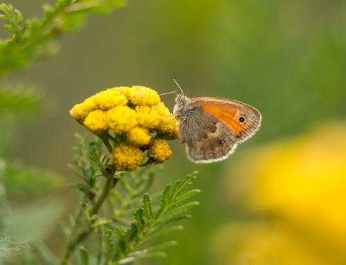Několik motýlů