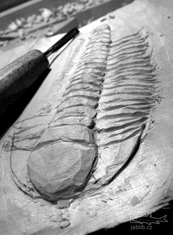 Začátek prvního trilobita, největší rod Carens