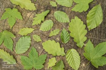 Jarní listy