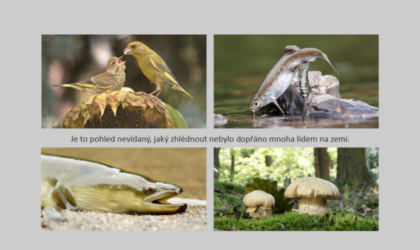 Naše příroda