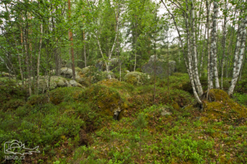 Severský les